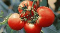 Чим помідори корисні для здоров`я?