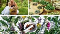 Ефективне лікування жіночих захворювань збором з трав