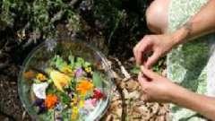 Які трави допоможуть при лікуванні ендометриту?