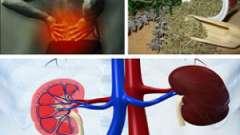 Народні методи лікування при хронічній нирковій недостатності