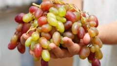 Застосування винограду при захворюваннях печінки і шлунково-кишкового тракту