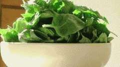 Салат із щавлю і шпинату