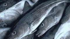 Тушкована риба